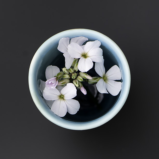 An overhead shot of a turquoise Vase with some Hesperis flowers inside.