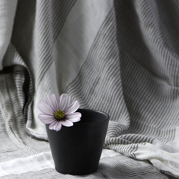 Pale pink Cosmos flower in a black beaker with a striped background.